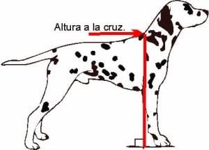 ¿que es la altura a la cruz de los perros?