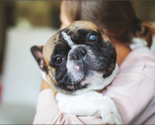 glaucoma canino enfermedad ocular
