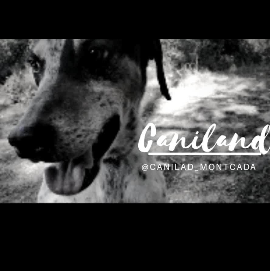 Caniland Montcada