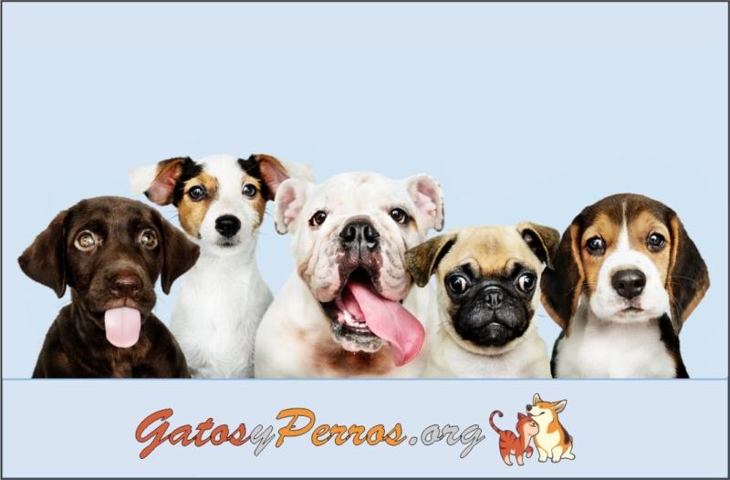 Los perros unos compañeros maravillosos