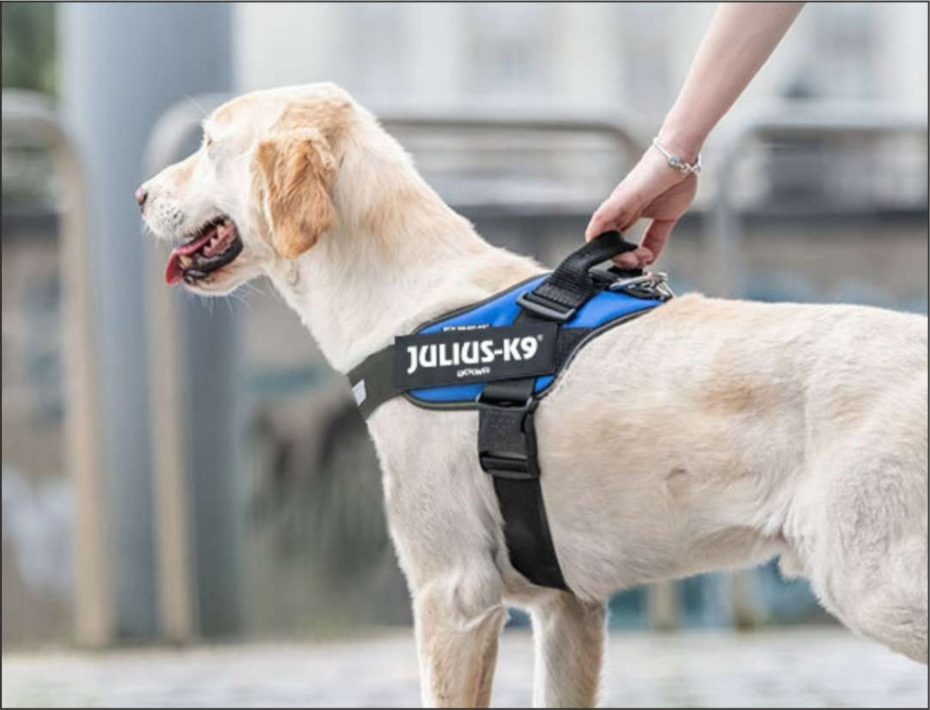 También para los perros teniendo en cuenta su comodidad este Julius K9 sería el mejor arnés